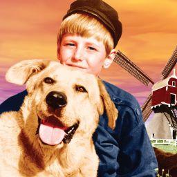 Фламандский пёс