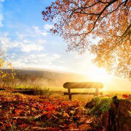 Хорошо ли вы помните стихи про осень?
