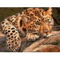 """Набор для раскрашивания Цветной """"Леопард"""", 40 х 30 см"""